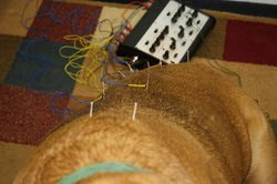 A dog receiving Electroacupuncture